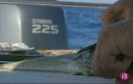 Quaranta-setena Trobada Social de pesca de serrans de Ciutadella