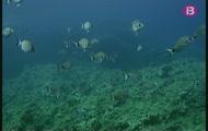 Inmersió a Formentera