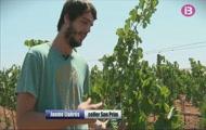 Xiringuitos, el sòl més car i el vi, una altra arma turística