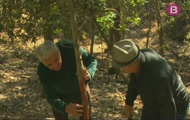 Collirem mel i estudiarem la salut dels boscos