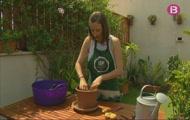 Collim melons i tomàtigues a Santa Margalida
