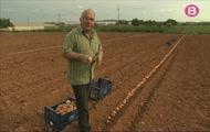 Anam a sembrar hortalissa de tardor i hivern amb uns pagesos un poc polissons